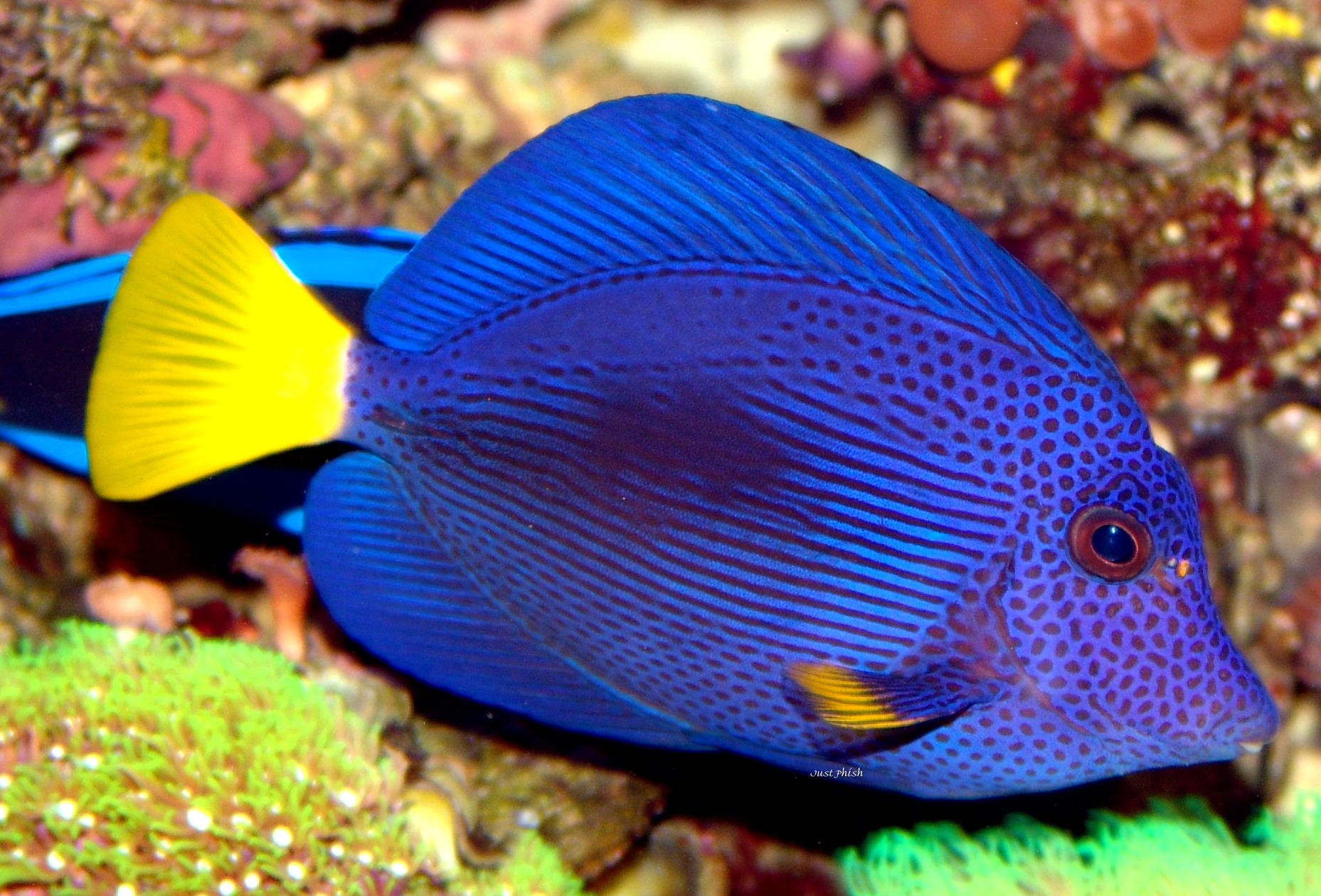 Tropical fish asia tropical fish wholesale for Wholesale tropical fish
